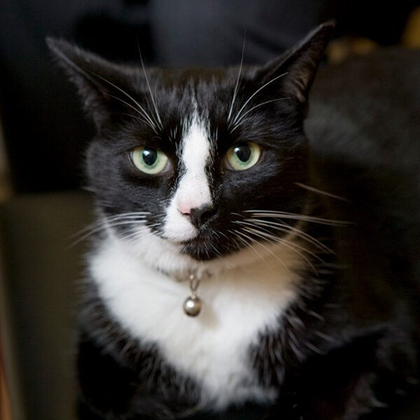 Portrait photo of Schnapps the cat.